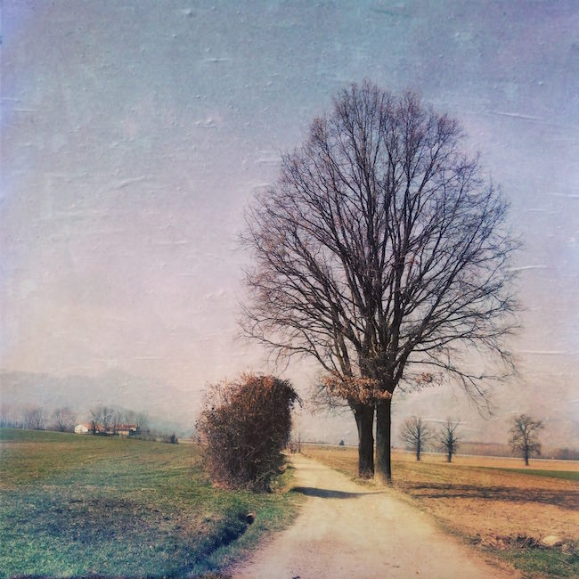 Scattare foto alberi iphone