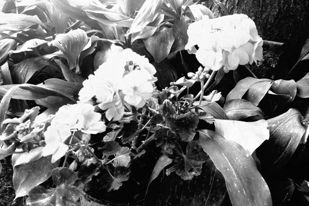 foto bianco e nero per iphone con mpro