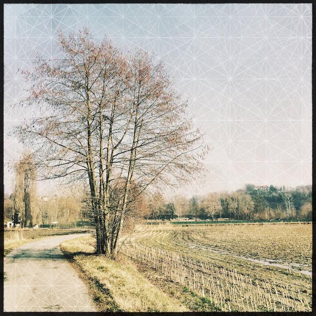 Consigli scattare foto alberi