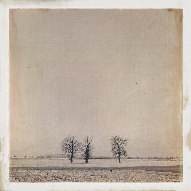 Filtri foto alberi
