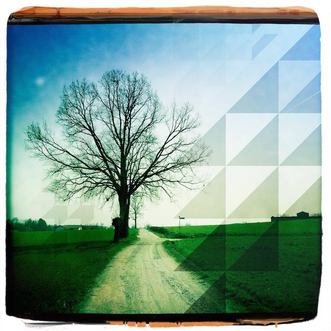 Tutorial fotografia alberi