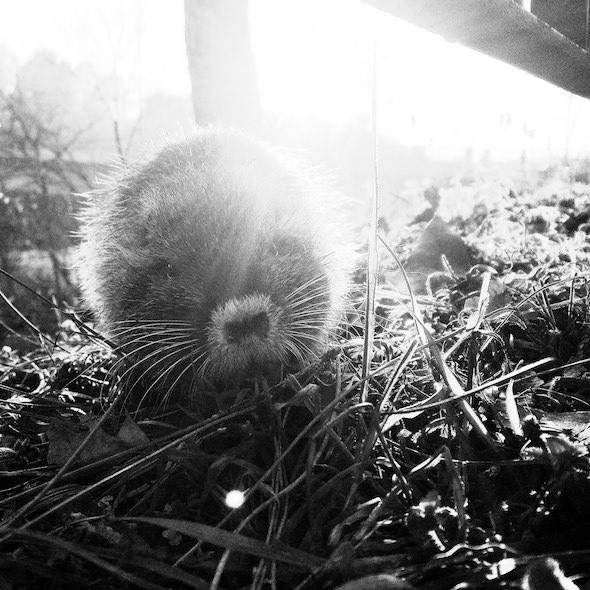 fotografia animale ritratto