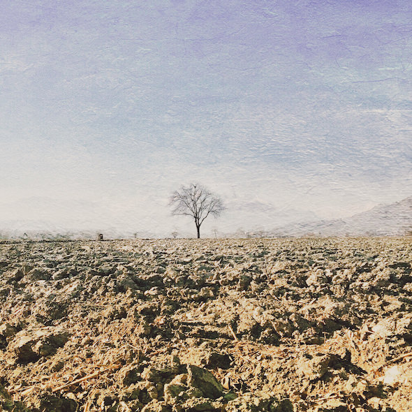 fotografia paesaggio albero