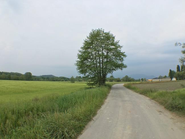 albero verde grandangolo olloclip