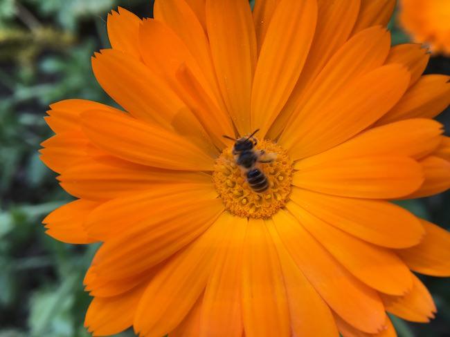 fiore arancio inmacus +10