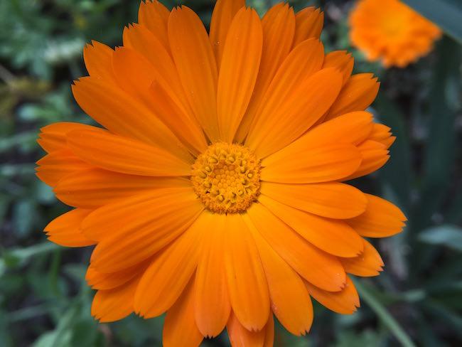 fiore arancio inmacus +8