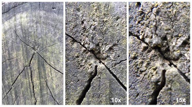 foto legno olloclip macro 10x e 15x