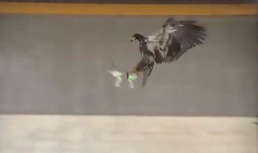 aquila abbatte droni