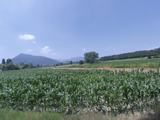 foto paesaggio verde xiaomi yi