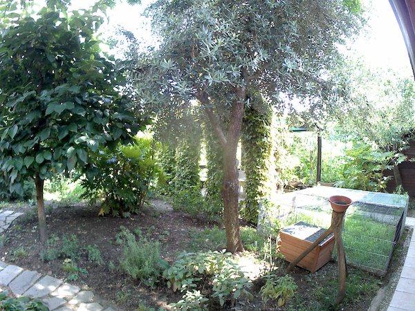 foto giardino magenta mgcool esplorer pro