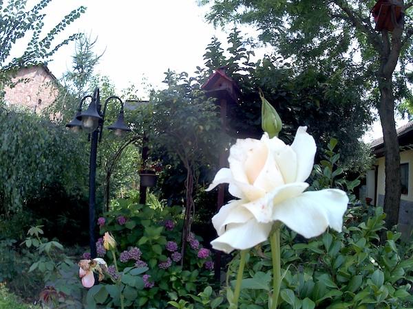 foto rosa bianca magenta mgcool esplorer pro